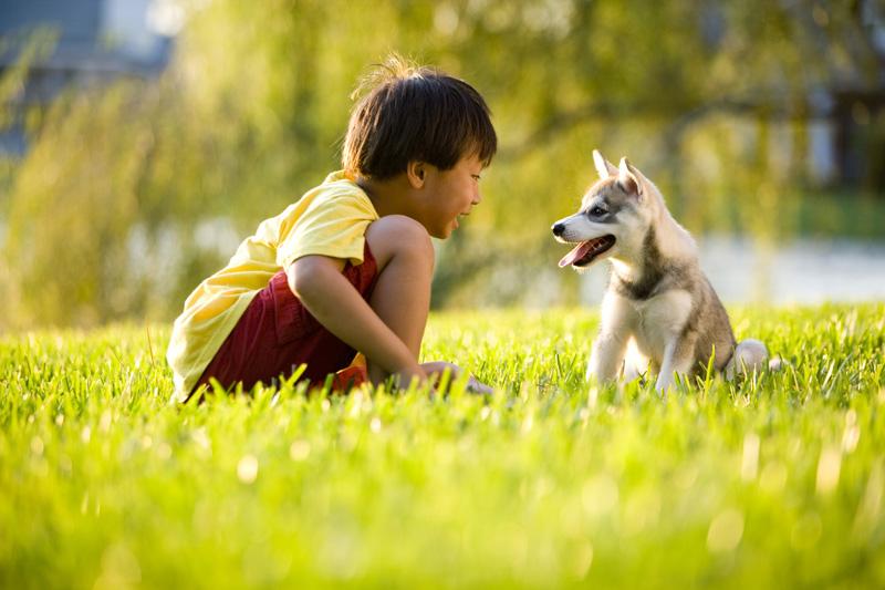 фото аляскинский кли кай с ребенком питомник щенки